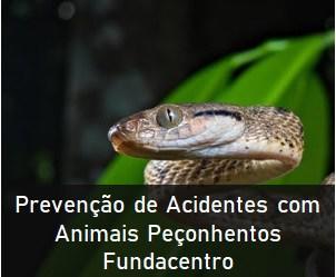 Prevenção de Acidentes com Animais Peçonhentos – Fundacentro